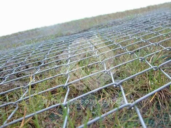 Tecco mesh supplies space for plant growing.